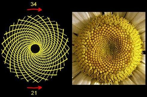 Golden Ratio flower